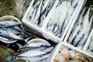 pertahankan-kualitas-distribusi-ikan