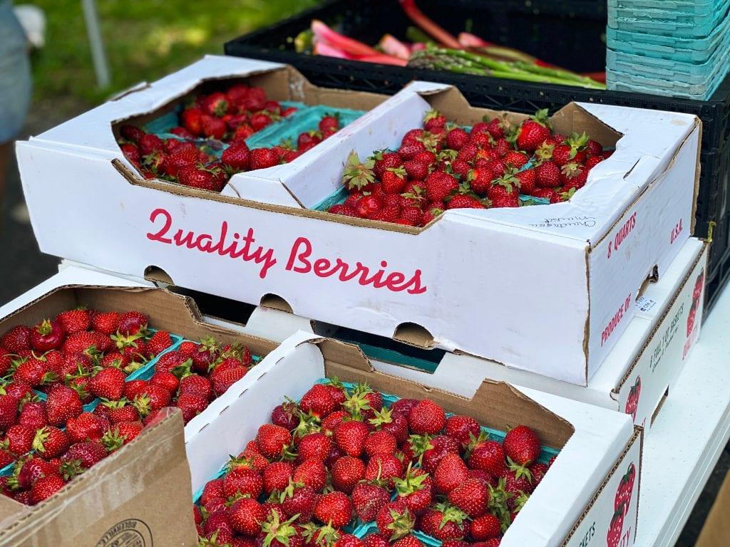 Distributor strawberry merupakan contoh Perusahaan Distributor Barang